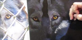 8 Stunning Easy Steps For Wolf Acrylic Painting