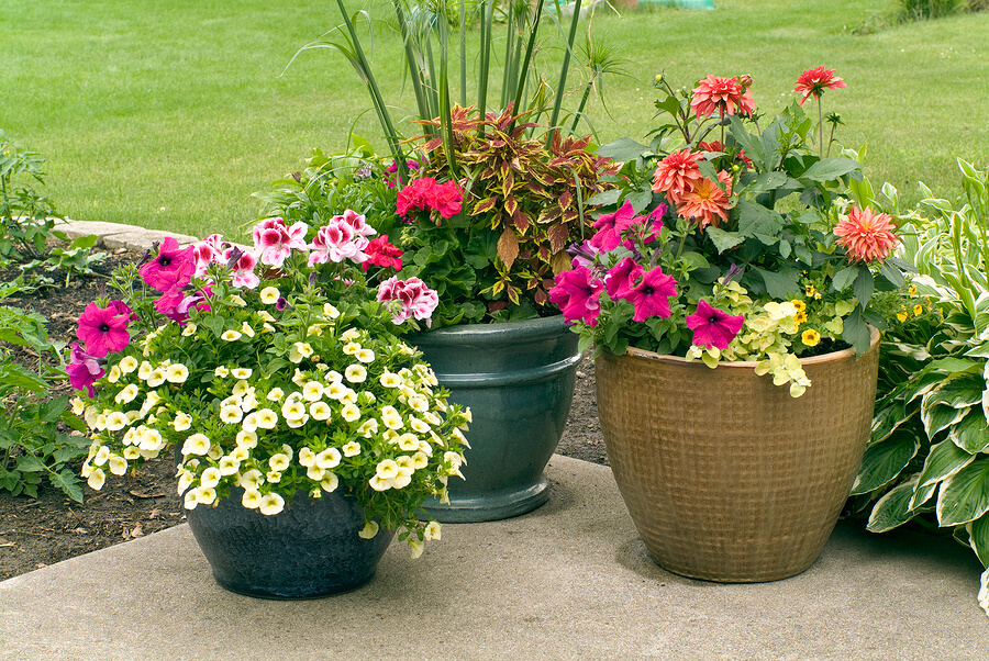 Running-Out-of-Painting-Ideas-?-Here-are-5-Tips-!-#-Flowerpots