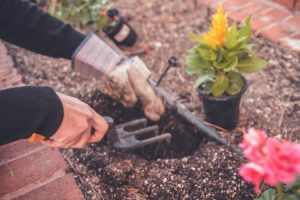 10-DIY-Home-Projects-During-Pandemic-Gardening